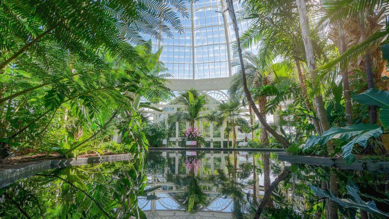 The reflecting pool in New York Botanical Garden