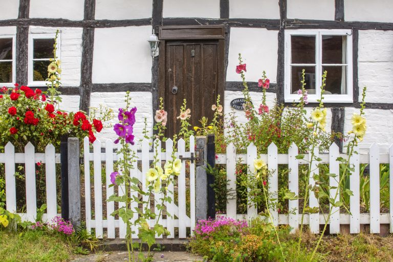 cottage garden with hollyhocks and white picket fence