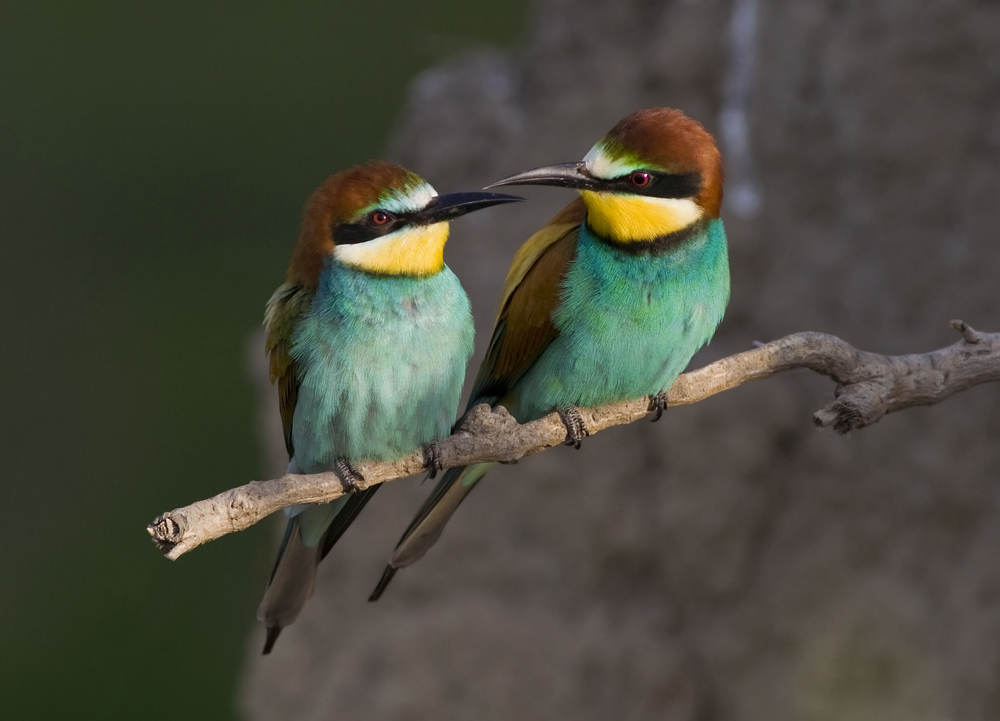 Animal Sex How Birds Do It Bird Sex Live Science