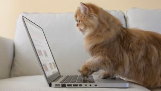 Amazon prime day cat deals: Ginger cat sat on couch with paw on keyboard of laptop looking at screen