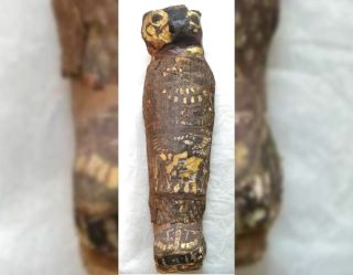 The cartonnage of the human mummy is shaped in a way that makes it look a bit like a hawk, and that's what scientists thought it was until recently.