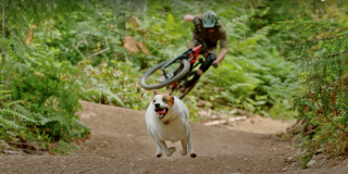 Shimano A Dog's Tale