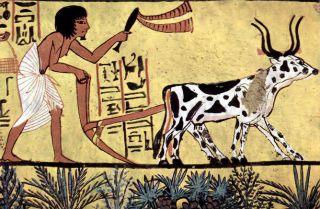 hieroglyphs, farming, agriculture