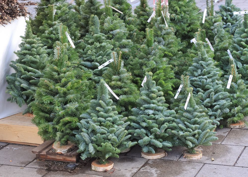 Christmas Trees: Real vs. Fake, and How to Keep Them Fresh ...
