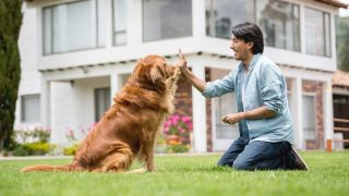brain games for dogs - dog doing a high-five with owner