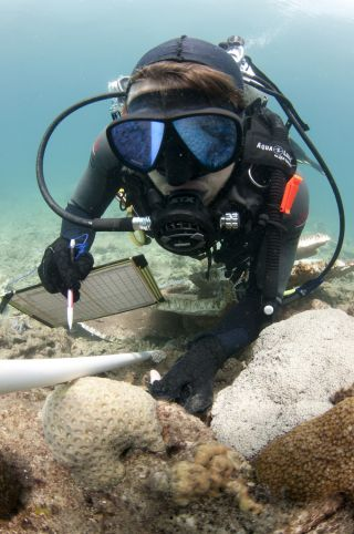 Effects of Dredging on Coral Reefs