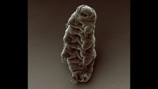 Tardigrades are nearly indestructible creatures that have been found in the most inhospitable places on Earth.
