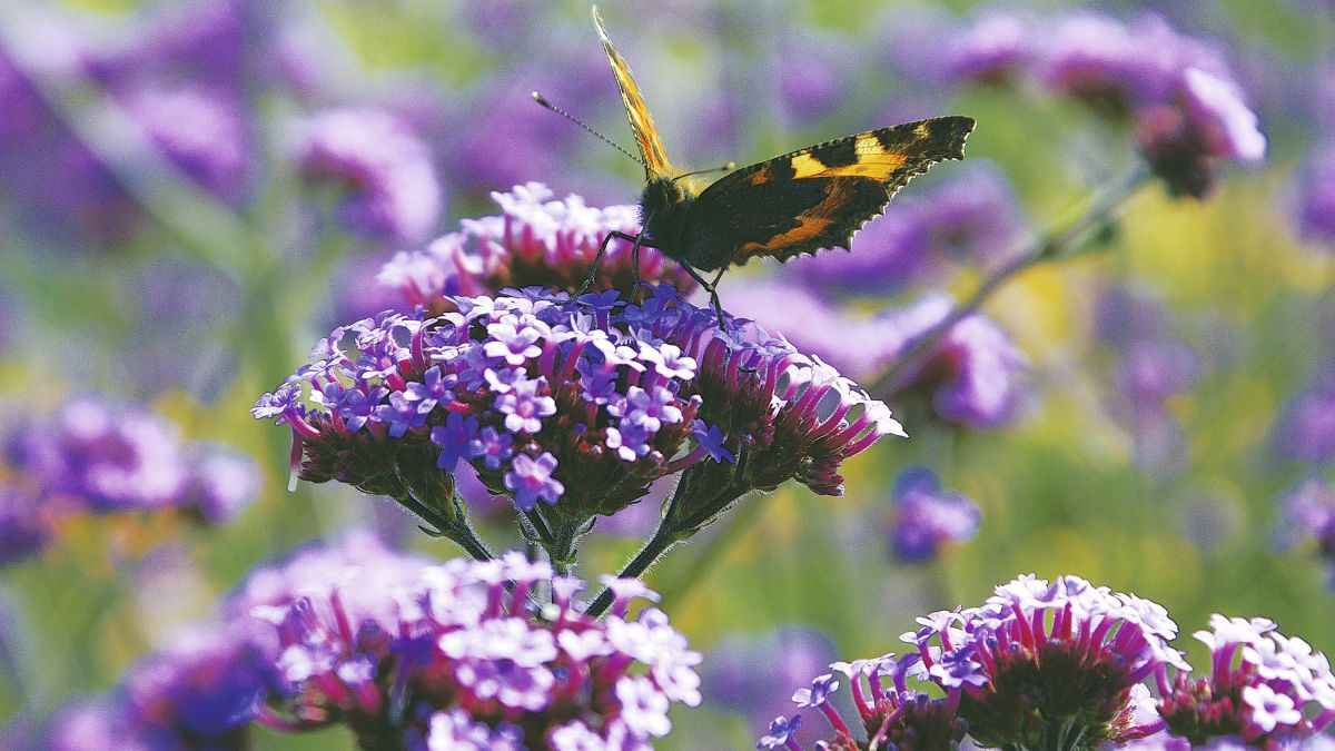 If you could have only one plant in your garden, what would you choose? Five garden experts reveal their top choices