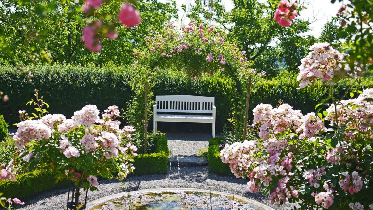 rose garden with arches and bench