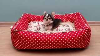 Dog in a heated pet beds
