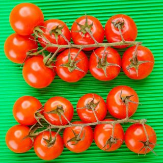 tomatoes on a green background