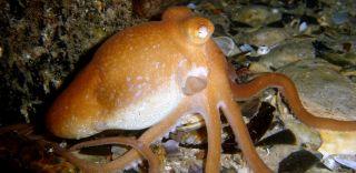 octopus, animals