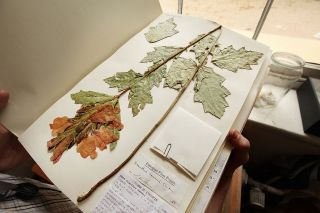 pressed-plant-specimen-getty.jpg