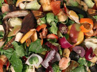 Composting Food Scraps