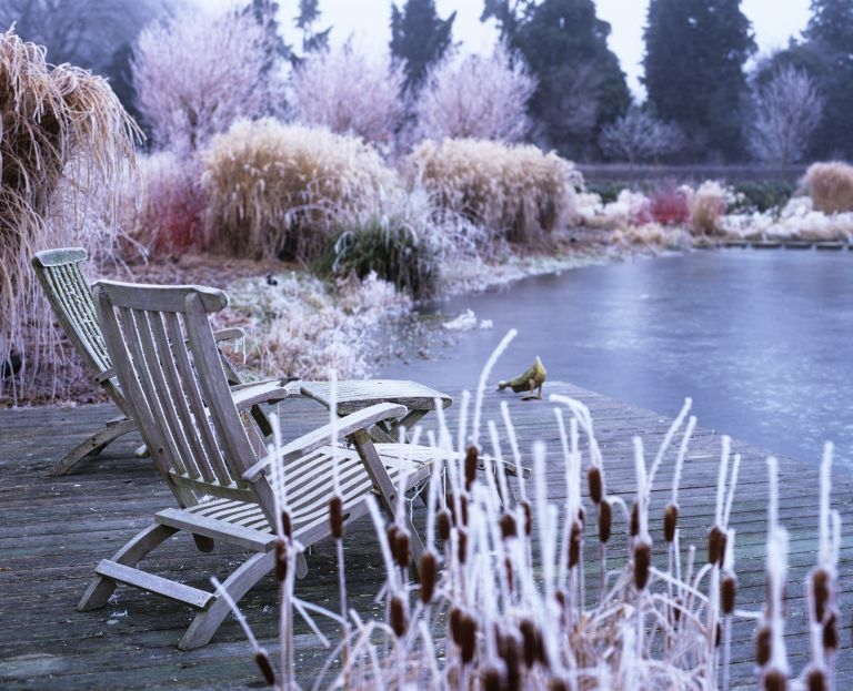 winter garden with red grasses and period house in the background