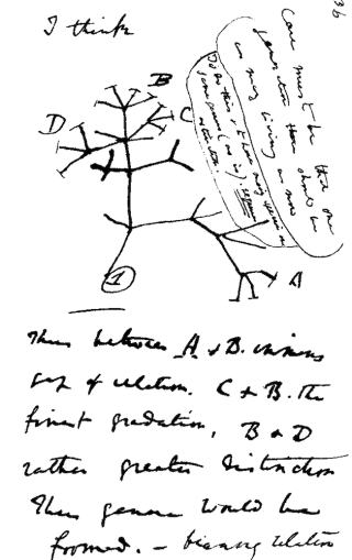 Charles Darwin's notes on evolution.