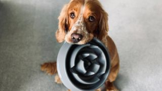 how much should i feed my puppy? a vet's guide