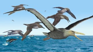 An artist's depiction of ancient albatrosses harassing a pelagornithid — with its fearsome toothed beak — as penguins frolic in the oceans around Antarctica 50 million years ago.