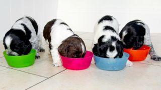 when to stop feeding puppy food