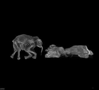 Khroma and Lyuba the baby mammoths get CT scanned.