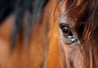 horse, horse health