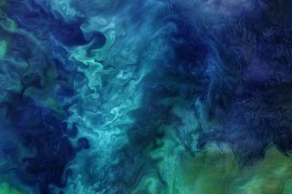 Phytoplankton blooms in the Chukchi Sea