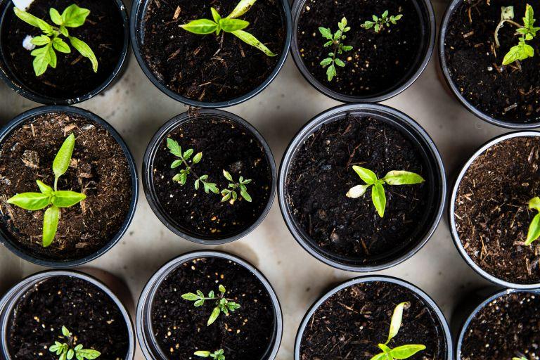 winter garden jobs: seed sowing