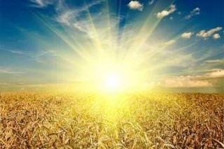 crops, farming, wheat