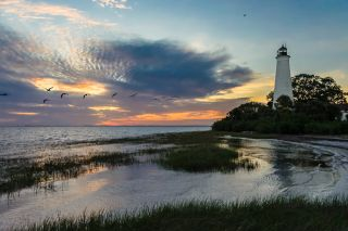 st marks national wildlife refuge, bird migrations, lighthouses, great florida birding trail