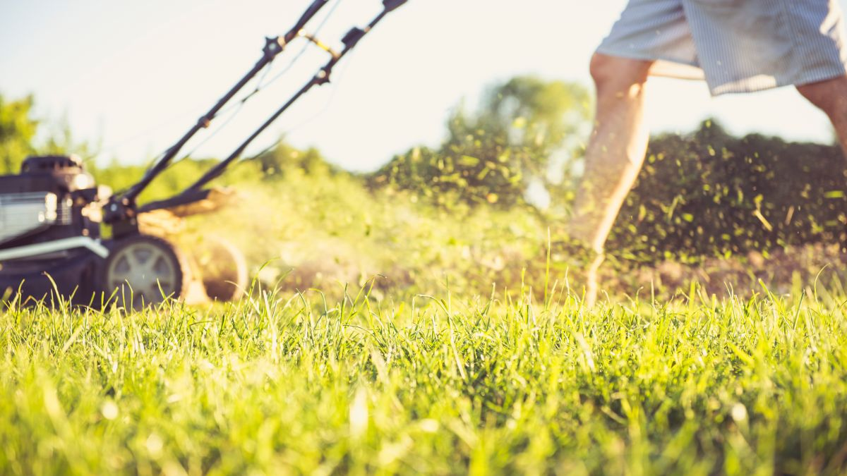 Can you cut wet grass? Your lawn care question, answered