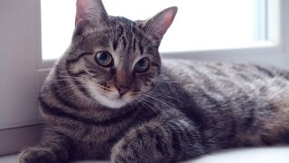 5 New Year's Resolutions to improve your cat's health