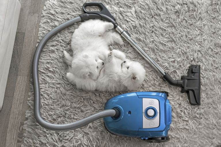 dogs with a vacuum