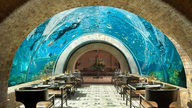 Tripadvisor Restaurant Awards Koral