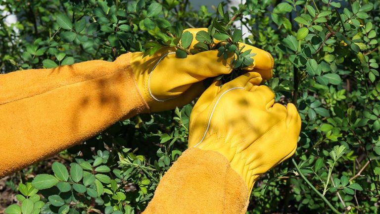 the best gardening gloves: Acdyion