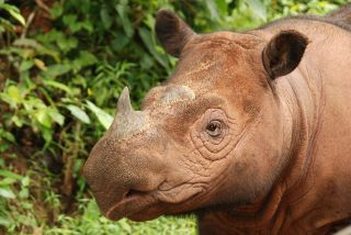 Many Countries Failing to Prevent Illegal Wildlife Trade