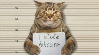 """A cat in a police lineup holding a sign which reads """"I stole bitcoins."""""""