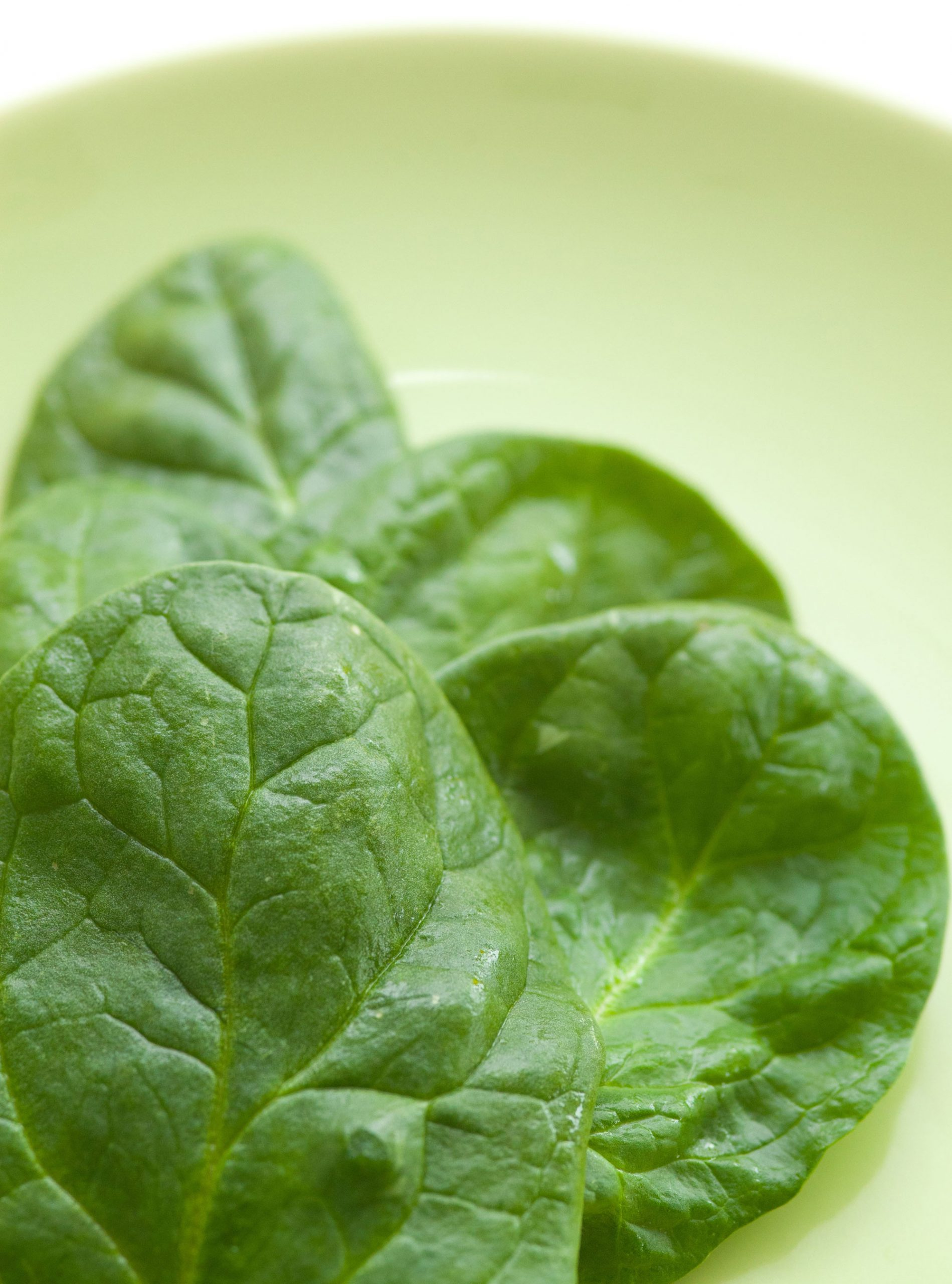 spinach photo