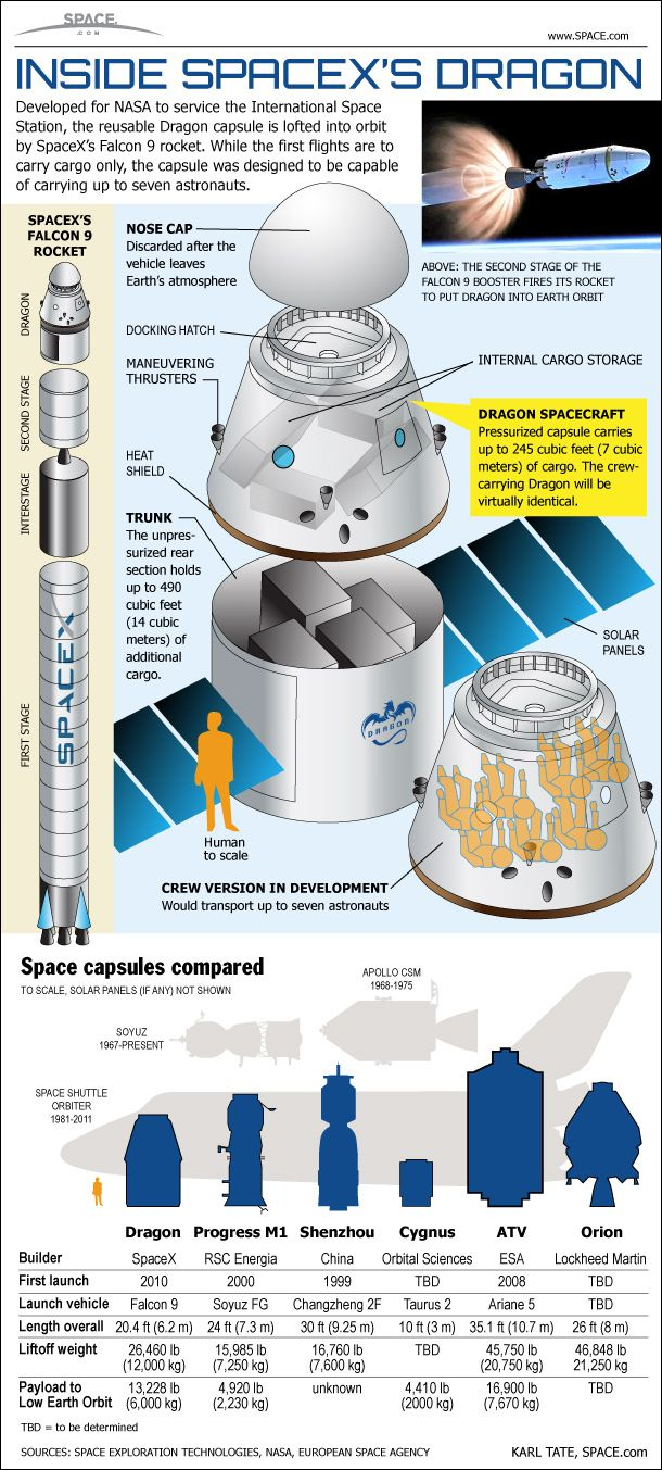 How Spacex U0026 39 S Dragon Space Capsule Works  Infographic
