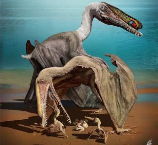 The young of the pterosaur <em>Hamipterus tianshanensis</em> likely couldn't fly at birth.