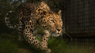 How to photograph big cats
