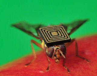 Queensland backpacker fruit fly, horticulture