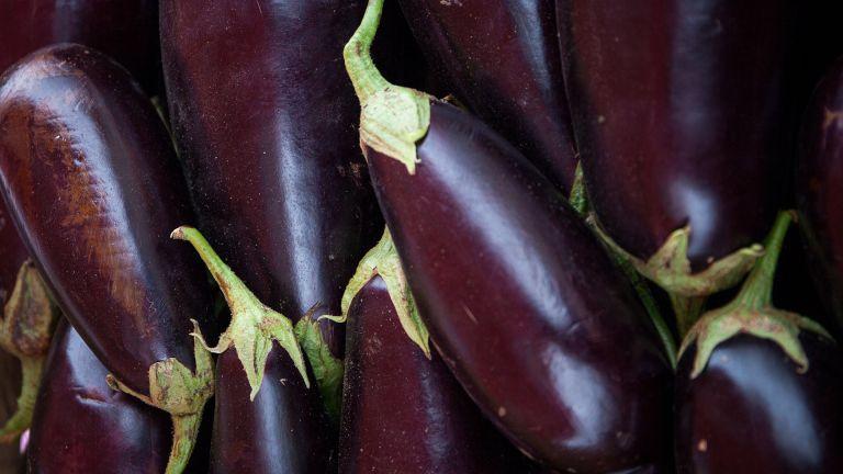 Ripe harvested aubergines or eggplants