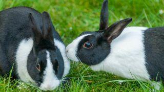 eye problems in rabbits