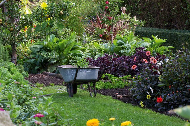 wheelbarrow by a veg patch in garden