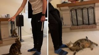 TikToker trains his cat to perform tricks