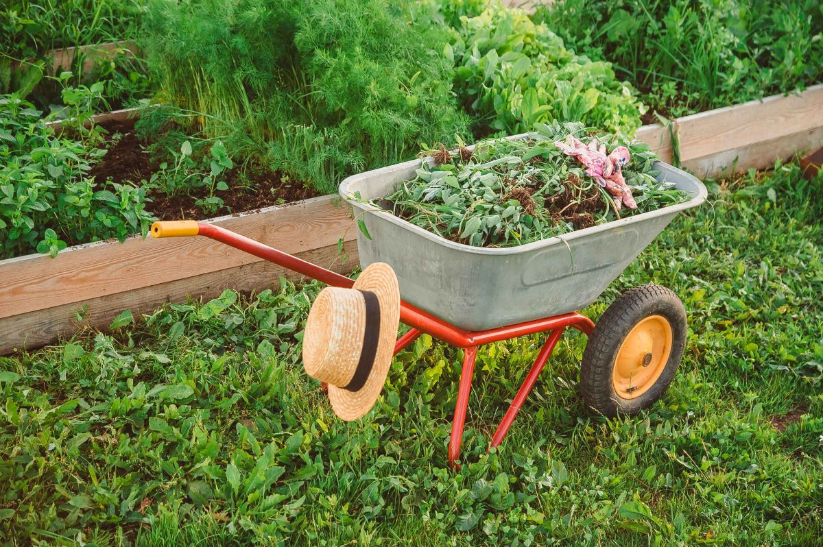 Gardening tips - cover