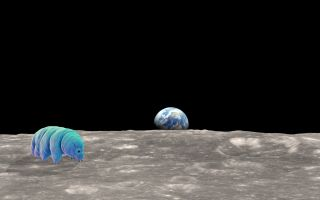 Tardigrades have been to the moon.