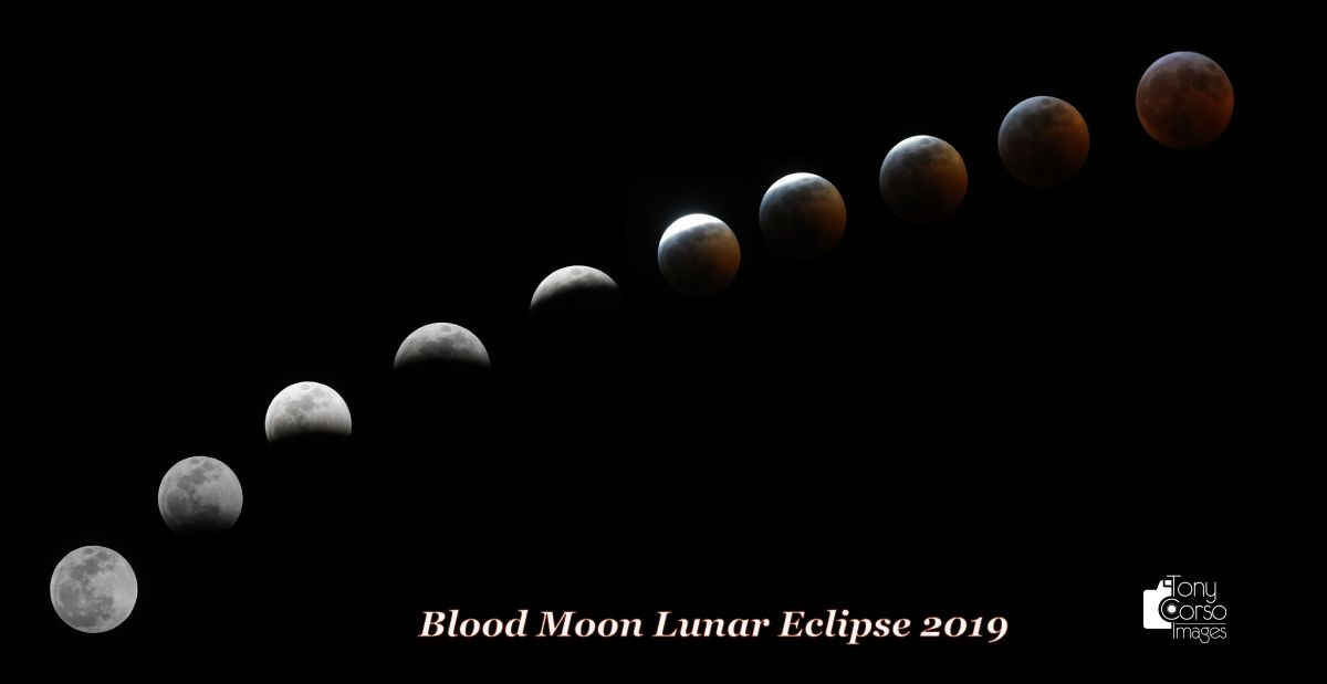 The Super Blood Wolf Moon of 2019 Looks AMAZING in These