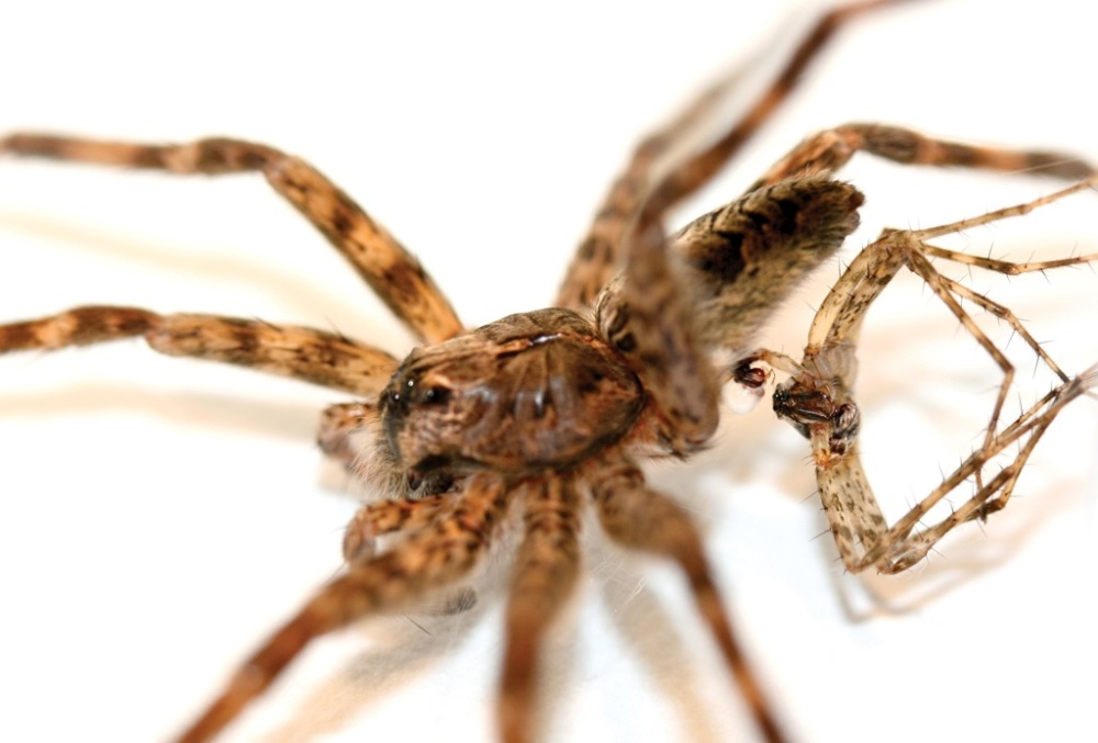 Tough Love Male Spiders Die For Sex Spider Sex Live Science