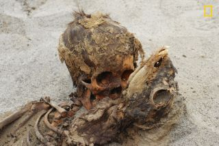 The remains of a sacrificed child (left) and llama (right) that were found at the Peruvian site called Las Llamas.